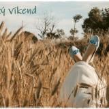wheat-field-6392428_960_720