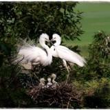 egret-2976899_960_720
