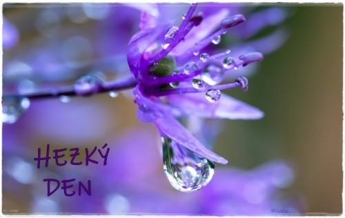 flower-6383235_960_720.jpg