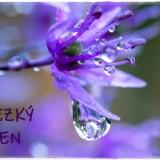 flower-6383235_960_720