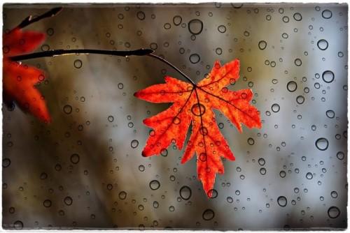 leaf-3865014_960_720.jpg
