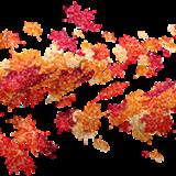 autumn-leaves-5386496_960_720