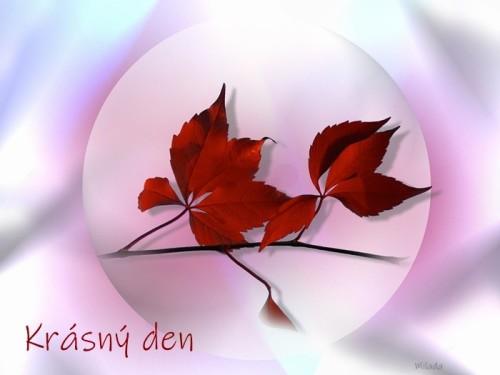 vine-leaves-4955146_960_720.jpg