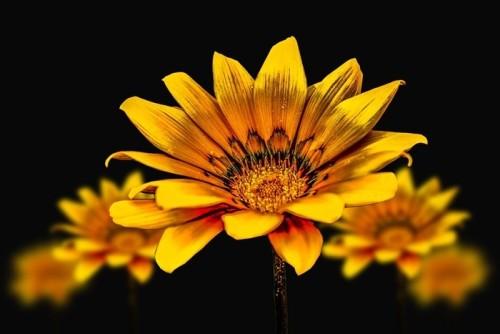 flower-3720383_960_720.jpg