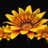 flower-3720383_960_720