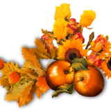 flowers-6344442_960_720.png
