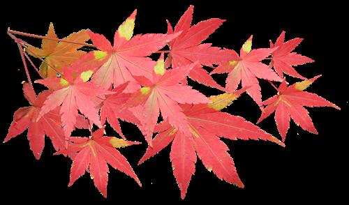 leaves 3417363 960 720