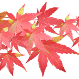 leaves-3417363_960_720.png