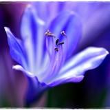 flower-6546256_960_720