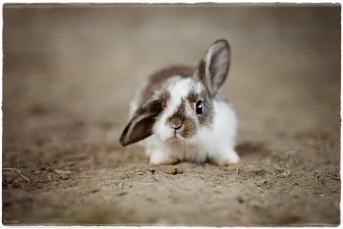 rabbit-4890861_960_720.jpg