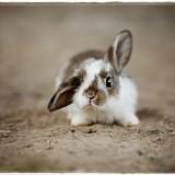 rabbit-4890861_960_720
