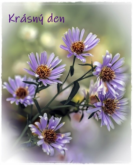 asters 6663638 960 720