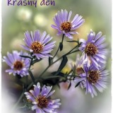 asters-6663638_960_720