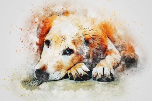 dog-3749561_960_720.jpg