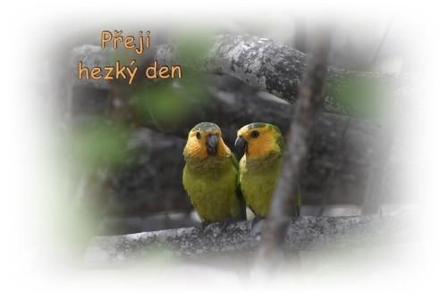 birds-6690006_960_720.jpg