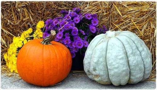 pumpkin-6667919_960_720.jpg